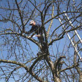 Mann auf einem Baum mit Säge beim Baumschneiden