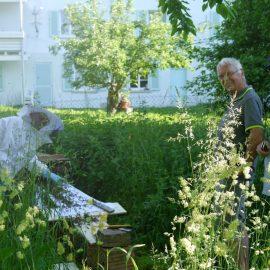 Staunend und mit einem Lächeln beobachten wir von der Essbaren Stadt die Prozession der Bienen in die Bienenkiste