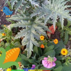 Ein Snapchat-Bild vom Ess-Gärtle in Böblingen. Auf dem Bild eine Artischocke, Mais und Blumen